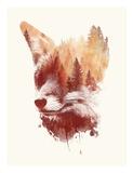 Blind Fox Print by Robert Farkas