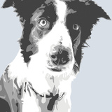 Border Collie Prints by Emily Burrowes