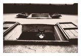Dali the Cat Prints by Lars Van de Goor