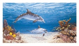 Dolphin World Prints by James Harris