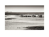 Chobe River Botswana Prints by Philippe-Alexandre Chevallier