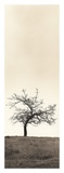 Cherry Blossom Tree Prints by Alan Blaustein