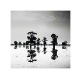 Cypress Swamp V Prints by Josef Hoflehner