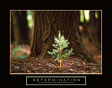 Determination – Little Pine Poster autor Unknown