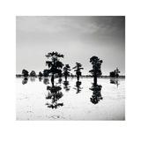 Cypress Swamp V Print by Josef Hoflehner