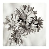 Florison 40 Prints by Alan Blaustein