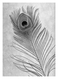Feathers 10 Posters by Alan Blaustein
