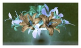 Floral Color 20 Prints by Alan Blaustein