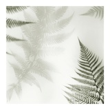 Ferns No. 2 Posters by Alan Blaustein