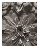 Florison 17 Art by Alan Blaustein