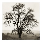 Country Oak Tree Plakaty autor Alan Blaustein