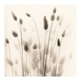 Italian Tall Grass No. 1 Prints by Alan Blaustein