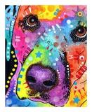 Closeup Labrador Print by Dean Russo