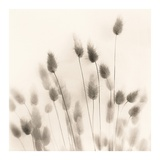 Italian Tall Grass No. 2 Prints by Alan Blaustein
