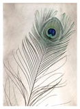 Feathers 11 Posters by Alan Blaustein