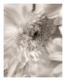 Florison 5 Print by Alan Blaustein