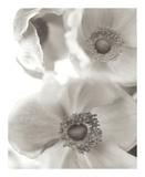 Florison 20 Prints by Alan Blaustein