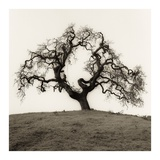 Hillside Oak Tree Plakaty autor Alan Blaustein