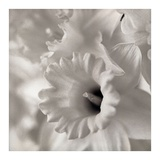 Florison 45 Prints by Alan Blaustein
