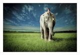 Elephant Carry Me Plakater af Jeff Madison
