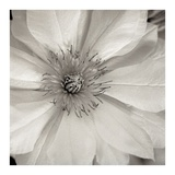 Florison 32 Prints by Alan Blaustein