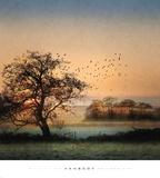 Good By Day Birds Kunstdrucke von William Vanscoy
