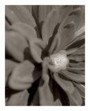 Florison 6 Prints by Alan Blaustein