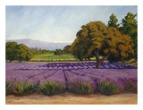Lavender Fields Prints by Susan Hoehn