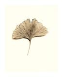 Ginkgo Leaf Print by Alan Blaustein