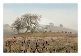 Oak Tree 68 Prints by Alan Blaustein
