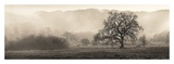 Meadow Oak Tree Print by Alan Blaustein
