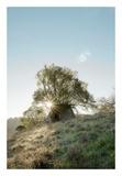 Oak Tree 35 Prints by Alan Blaustein