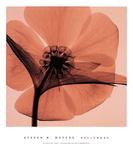 Elleboro Poster di Steven N. Meyers