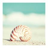 Nautilus Posters by Carolyn Cochrane