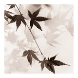 Japanese Maple Leaves No. 1 Prints by Alan Blaustein
