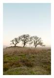 Oak Tree 34 Art by Alan Blaustein