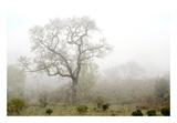 Oak Tree 62 Posters by Alan Blaustein