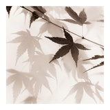 Japanese Maple Leaves No. 2 Prints by Alan Blaustein