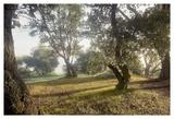 Oak Tree 70 Art by Alan Blaustein