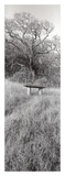 Novato Oak Prints by Alan Blaustein