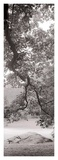 Hampton Field Tree 1 Prints by Alan Blaustein