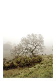 Oak Tree 43 Prints by Alan Blaustein