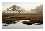 Oak Tree 65 Prints by Alan Blaustein
