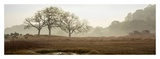 Oak Tree 64 Prints by Alan Blaustein