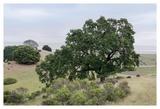 Oak Tree 108 Prints by Alan Blaustein