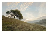 Oak Tree 11 Prints by Alan Blaustein