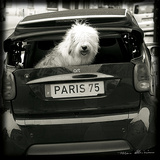 Paris Dog I Poster by Marc Olivier