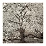 Hampton Magnolia #2 Reprodukcje autor Alan Blaustein