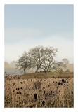 Oak Tree 67 Prints by Alan Blaustein