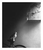 Cierpliwość Poster autor Jon Bertelli